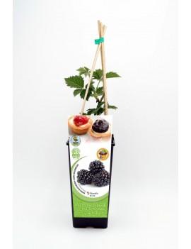 Fresanas Mora sin Espina 2L Rubus fruticosus