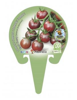 Fresanas Tomate Blach Cherry plantón en maceta de 10,5 cm. de diámetro