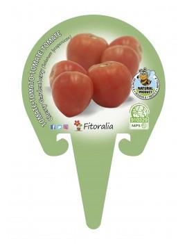 Fresanas Tomate Cherry Garden Berry plantón en maceta de 10,5 cm. de diámetro