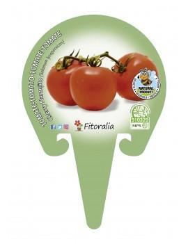 Fresanas Tomate Cherry Naranjito plantón en maceta de 10,5 cm. de diámetro