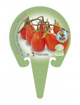 Fresanas Tomate Red Pear Cherry planton en maceta de 10,5 cm. de diámetro
