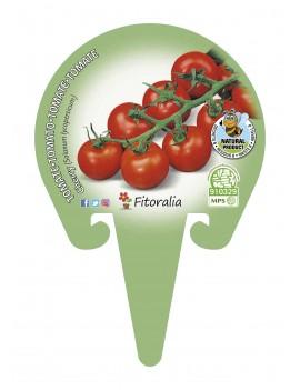 Fresanas tomate cherry redondo plantón en maceta de 10,5 cm. de diámetro