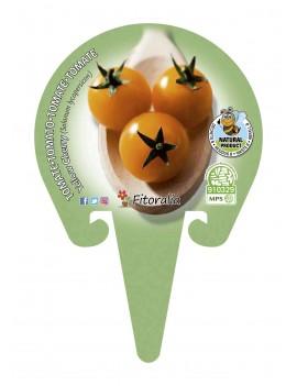 Fresanas tomate Yellow Cherry plantón en maceta de 10,5 cm de diámetro