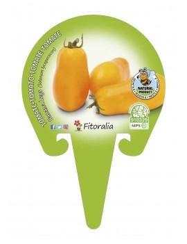 Fresanas Tomate Banana Legs plantón en maceta de 10,5 cm. de diámetro