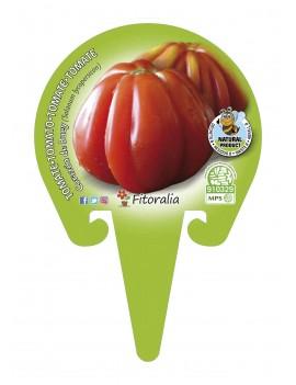 Fresanas Tomate Corazón de Buey plantón en maceta de 10,5 cm. de diámetro