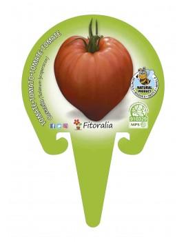 Fresanas tomate corazón plantón en maceta de 10,5 cm. de diámetro
