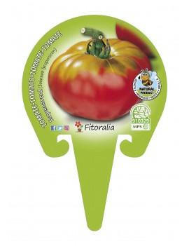 Fresanas Tomate Esquenaverd plantón en maceta de 10,5 cm. de diámetro