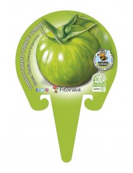 Fresanas Tomate Green Zebra plantón en maceta de 10,5 cm. de diámetro