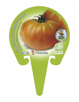 Fresanas Tomate Muchamiel plantón en maceta de 10,5 cm. de diámetro