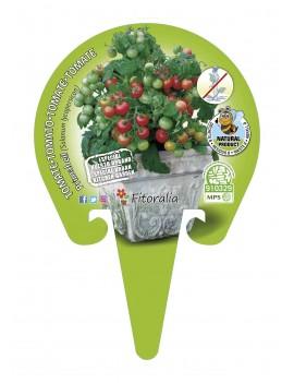 Fresanas Tomate Primabell plantón en maceta de 10,54 cm. de diámetro