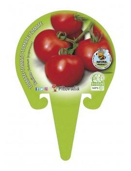 Fresanas Tomate Racimo plantón en maceta de 10,5 cm. de diámetro