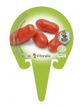 Fresanas Tomate San Manzano plantón en maceta de 10,5 cm. de diámetro