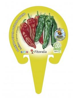Fresanas Pimiento Italiano plantel ecológico en maceta de 10,5 cm. de diámetro