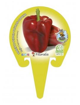 Fresanas Pimiento Rojo plantel ecológico en maceta de 10,5 cm. de diámetro
