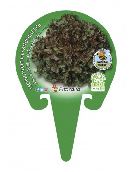 Fresanas Lechuga hoja de roble plantel ecológico en maceta de 10,5 cm