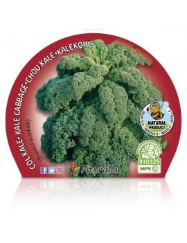 Fresanas Col Kale plantel ecológico en maceta de 10,5 cm.