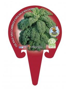 Col Kale plantón ecológico...