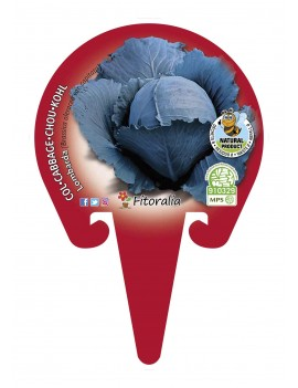 Fresanas Col lombarda planel ecológico en maceta de 10,5 cm.