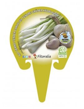 Fresanas Ajo tierno plantel ecológico en maceta de 10,5 cm. de diámetro