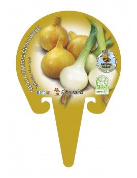 Fresanas Cebolla babosa plantel ecológico en maceta de 10,5 cm. de diámetro