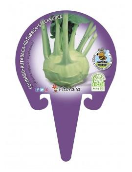 Fresanas Colinabo plantel ecológico en maceta de 10,5 cm. de diámetro