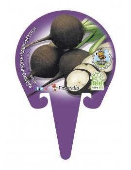 Fresanas Rábano Negro plantel ecológico en maceta de 10,5 cm. de diámetro