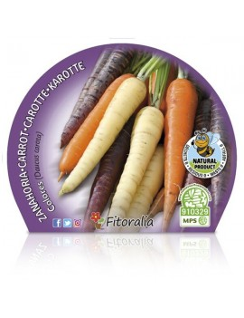 Fresanas Zanahoria de colores plantel ecológico en maceta de 10,5 cm. de diámetro