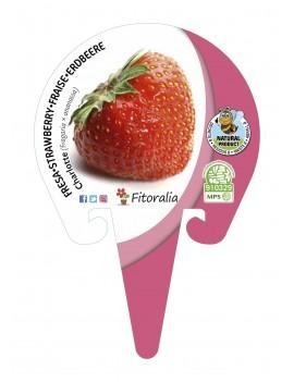 Fresanas Fresa Charlotte plantel ecológico en maceta de 10,5 cm. de diámetro