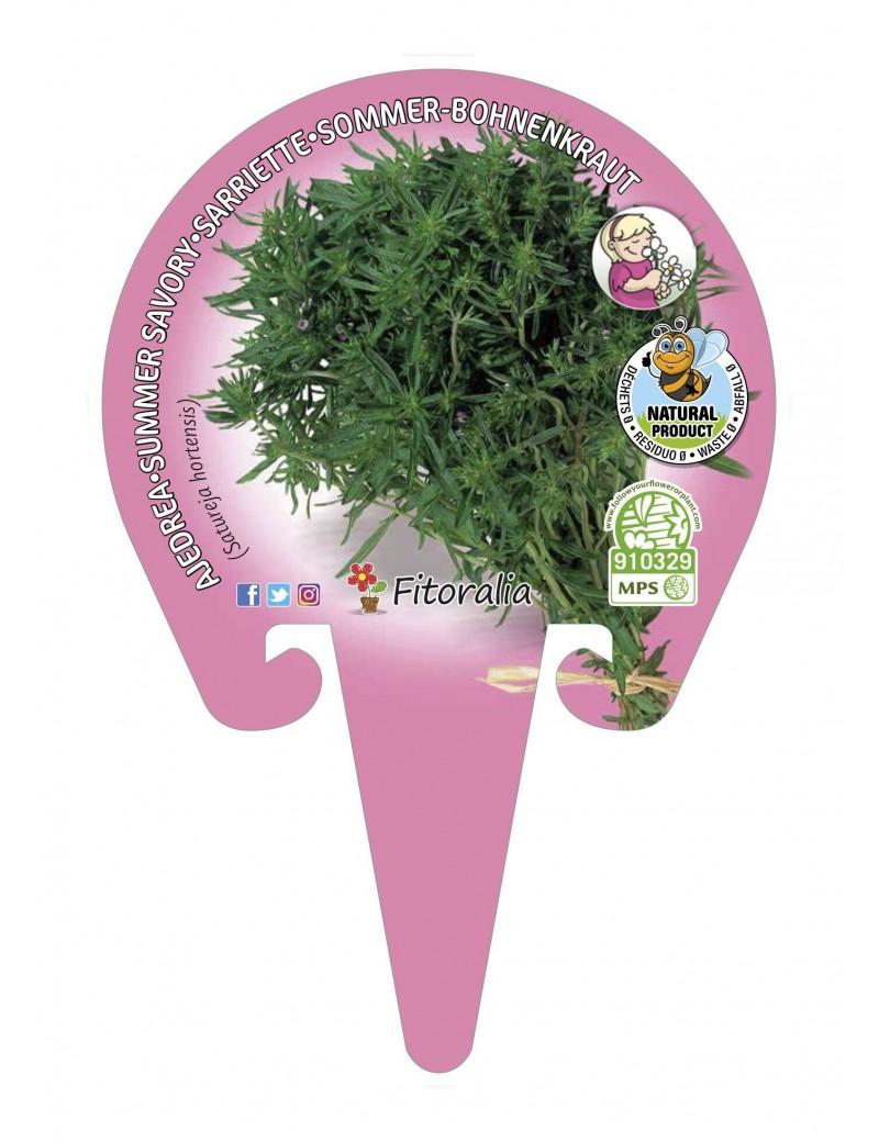 Fresanas Ajedrea plantel ecológico