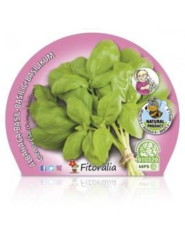 Fresanas Albahaca Hoja Ancha Plantel ecológico en maceta de 10,5 cm. de diámetro