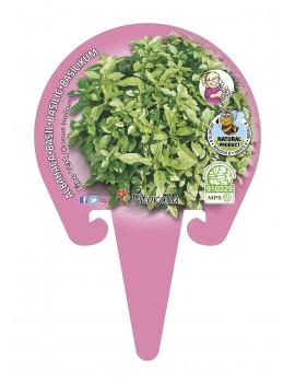 Fresanas Albahaca Hoja Pequeña Plantel ecológico en maceta de 10,5 cm. de diámetro