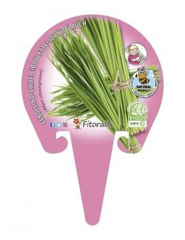 Cebollino Plantel ecológico en maceta de 10,5 cm. de diámetro