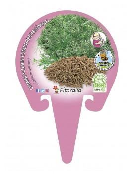 Fresanas Comino Plantel ecológico en maceta de 10,5 cm. de diámetro