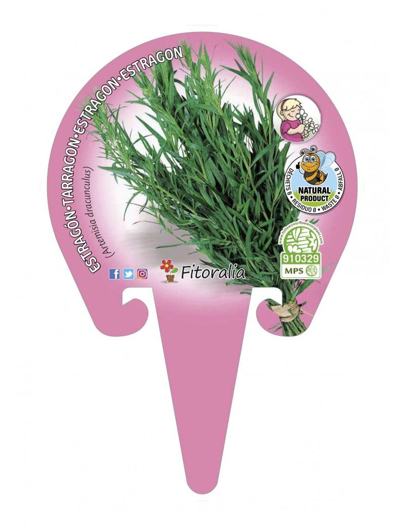 Fresanas Estragón Plantel ecológico en maceta de 10,5 cm. de diámetro