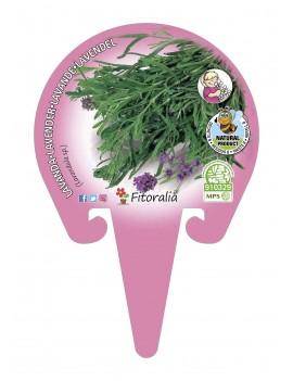 Fresanas Lavanda Plantel ecológico en maceta de 10,5 cm. de diámetro