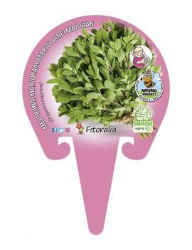 Fresanas Mejorana Plantel ecológico en maceta de 10,5 cm. de diámetro