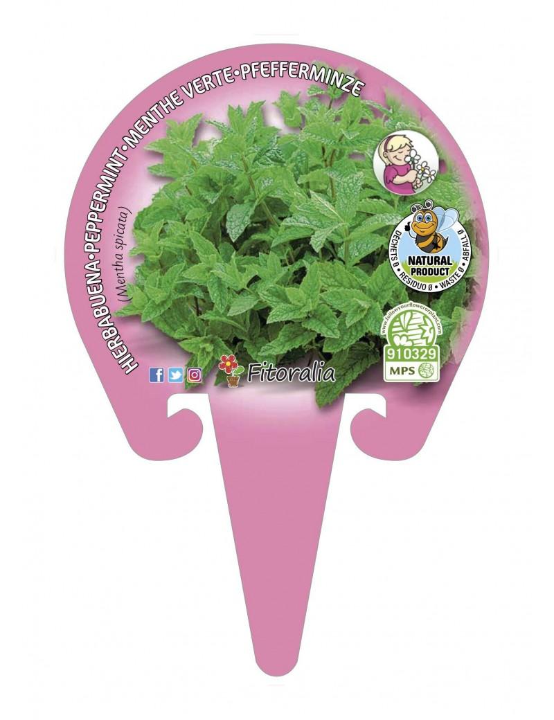 Fresanas Menta Hierbabuena Plantel ecológico en maceta de 10,5 cm. de diámetro