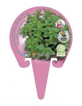 Fresanas Menta Piperina Plantel ecológico en maceta de 10,5 cm. de diámetro