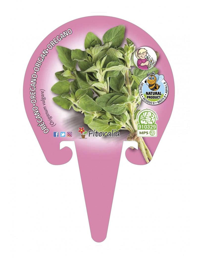 Fresanas Orégano Plantel ecológico en maceta de 10,5 cm. de diámetro