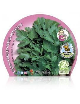 Fresanas Perejil Plantel ecológico en maceta de 10,5 cm. de diámetro