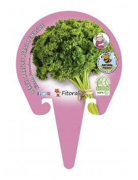 Fresanas Perejil Rizado Plantel ecológico en maceta de 10,5 cm. de diámetro