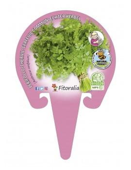Fresanas Perifollo Plantel ecológico en maceta de 10,5 cm. de diámetro