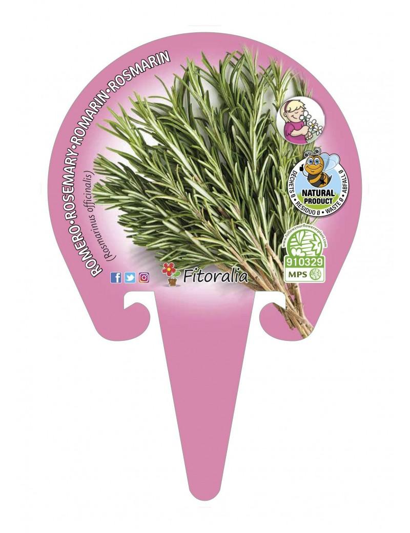 Fresanas Romero Plantel ecológico en maceta de 10,5 cm. de diámetro
