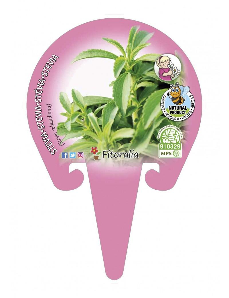 Fresanas Stevia Plantel ecológico en maceta de 10,5 cm. de diámetro