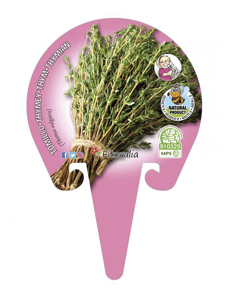 Fresanas Tomillo Plantel ecológico en maceta de 10,5 cm. de diámetro