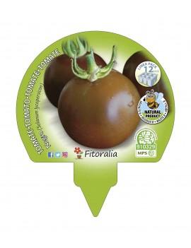 Fresanas Tomate Negro plantón ecológico pack de 12 unidades 34x32mm.