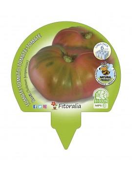 Fresanas Tomate Rosa plantón ecológico pack de 6 unidades 54x43 mm.