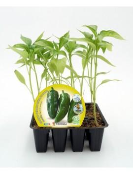 Fresanas Pimiento de Gernika plantón ecológico pack 12 unidades