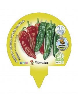 Fresanas Pimiento de Italiano plantón ecológico pack 12 unidades