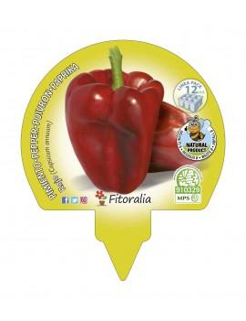 Fresanas Pimiento Rojo plantón ecológico pack 12 unidades